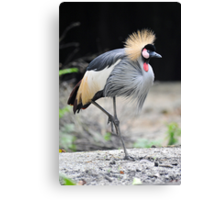 African Grey Crowned Crane. Canvas Print