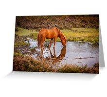 New Forest pony at waterhole with reflection Greeting Card