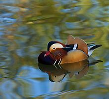 Mandarin Reflection by Sue Robinson