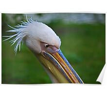 Pelican head shot Poster