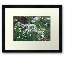 Fall Chive Blossoms Framed Print