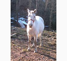 Pretty White Horse Standing in a Small Field Unisex T-Shirt