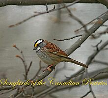 Songbirds of the Canadian Prairies by Vickie Emms