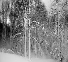 Virgina Snow by Brian Alexander