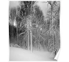 Virgina Snow Poster