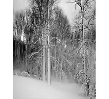 Virgina Snow Photographic Print