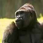Female Gorilla by fg-ottico
