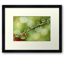 Autumn Dew Drops Framed Print