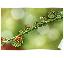 Autumn Dew Drops Poster