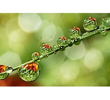 Autumn Dew Drops Photographic Print