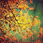 Fall into me by ShellyKay