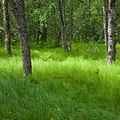 green green grass of home.. by Jari Hudd