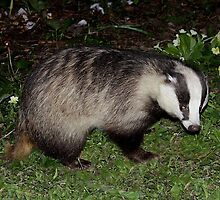 'Thank you so much, kind people!!' Said Mr Brock the Badger by Rivendell7