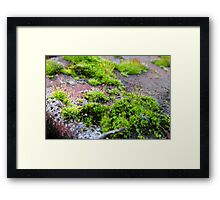 Tiny World Framed Print
