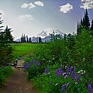 Tipsoo Trail by Marcus Angeline