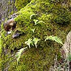 Licorice Root Fern by Jess Meacham