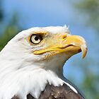 Head of American Eagle by Pauws99
