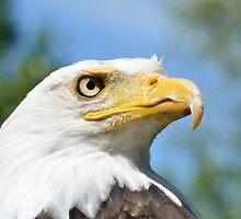 Head of American Eagle by Pauws99