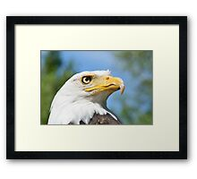 Head of American Eagle Framed Print