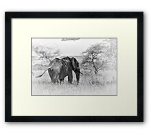"""""""Pass by of a old Giant"""" (B&W) Framed Print"""