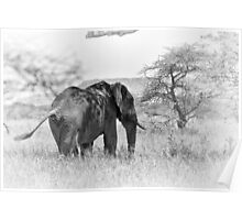 """""""Pass by of a old Giant"""" (B&W) Poster"""