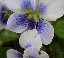 Wild Geranium by WildestArt