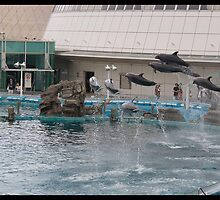 Dolphins flying by jonshock