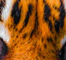 Tigers eyes Sticker
