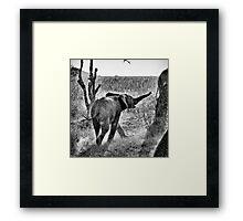"""Toroo"" (B&W) Framed Print"