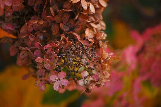 Autumn Hydrangea by Joanne  Bradley