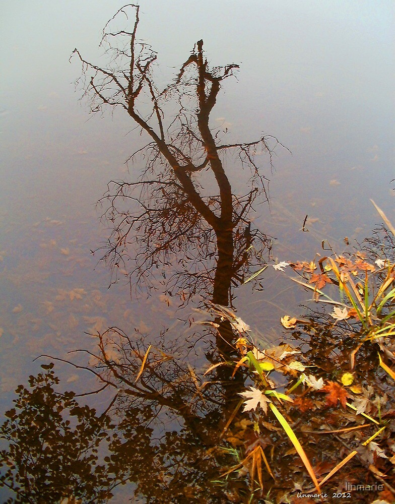 Octobers Reflection... by linmarie