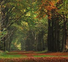 Walking on another late October lane by jchanders