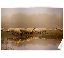 Sheep in the mist Poster