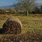Haystack in the Beacons by aledwards