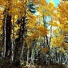 """Autumn Magic"" by Lynn Bawden"