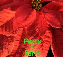 Peace on Earth Poinsettia by Adam Bykowski