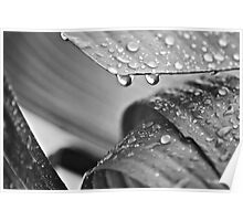 Water droplets on a Palm Leaf Poster