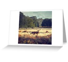 Richmond Park, London Greeting Card