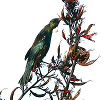 Tui on Flax by Heike Richter
