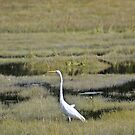 Great Egret by lumiwa