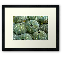 Sea Urchin Shells Framed Print