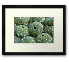 Sea Urchin Shells Framed Print