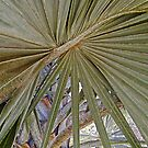 Palm leaves by globeboater