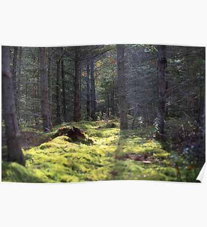 The Forest Floor Poster