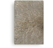 Sensuous fur Canvas Print