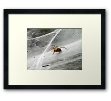 'come into my parlour...' Framed Print