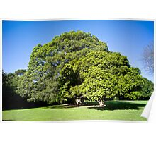 Beautiful Trees Poster