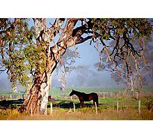 Gum Tree Shade Photographic Print