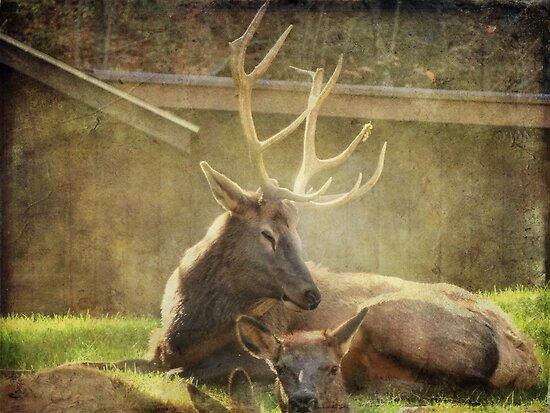 Elk Family by vigor