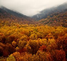 Tennessee October by Chaney Swiney